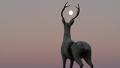 사슴 뿔에 달을 품은 하얀 사슴