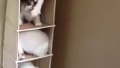고양이들 노는 방법에 터짐
