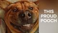 강아지 다양한 표정 순간 포착