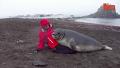 아기 바다코끼리 애교 귀여워