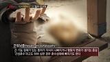 'ET 할머니'의 임신이 가짜?! 밝혀지는 충격 진실! [싸인] 20150303 88회 채널A 바로가기