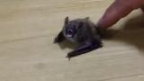 가정집에 박쥐 난입한 실제 상황