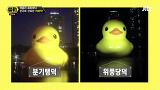 """""""인기스타 됐쪄"""" 화제의 '러버덕' 둘러싼 인기와 논란 - 썰전 86회"""