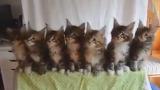 고양이 7마리를 컨트롤 한다면?
