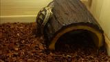 등반하는 거북이
