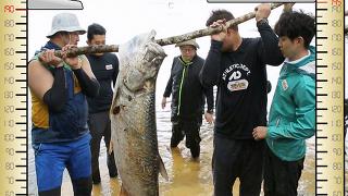 185cm 괴어 사발로 발견 '압도적인 비주얼' [정글의 법칙] 182회 20151009