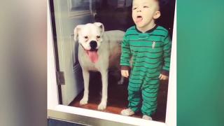 아기와 개 함께 키웠더니 그만