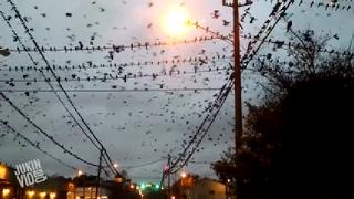 하늘을 덮은 새 떼