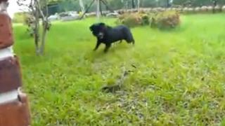 개 vs 뱀 목숨을 건 한판 승부
