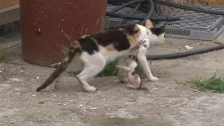 그물에 걸린 고양이들 구출작전
