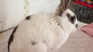 토끼가 자는 법 15초 후 반전
