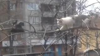 고양이 농락에 미친 듯 웃었음