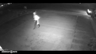 화분을 훔치던 서투른 도둑