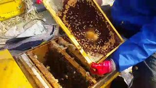 화분떡보충