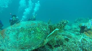 필리핀 바다속에서 거북이와의 만남~!!