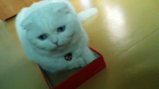 박스는 다 내꺼라옹