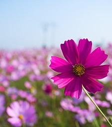 빨간 단풍처럼 화려한<br>꽃 보며 힐링하는 시간