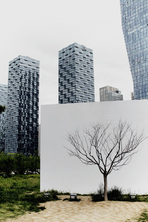 A Tree in Songdo Central Park