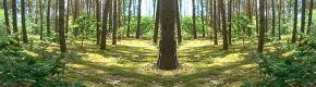 (HDRI) 숲속, 산속, 산, 계곡, 시원함, 싱그러움, 자연, 풀, 녹색