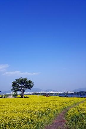 Guri Hangang Park Flowers