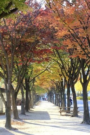 Beautiful tree-lined street
