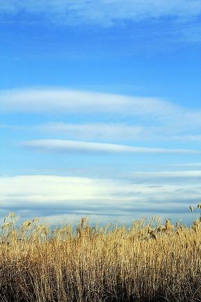 A field under a blue sky