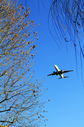 Airplane and tree with the blue sky