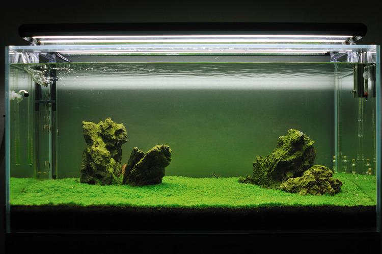 4자 수조 쿠바펄 키우기
