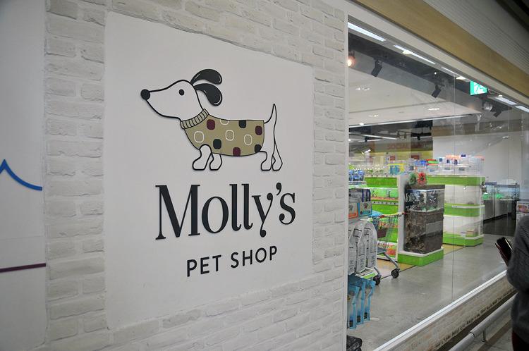 [부산/서면] 몰리스 펫샵(Molly's PET SHOP) 서면점