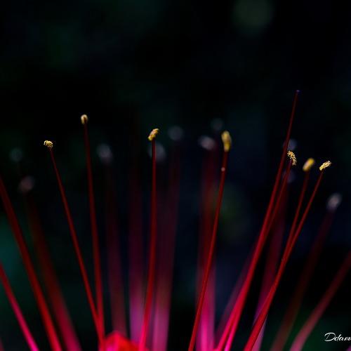 꽃무릇 사진을..