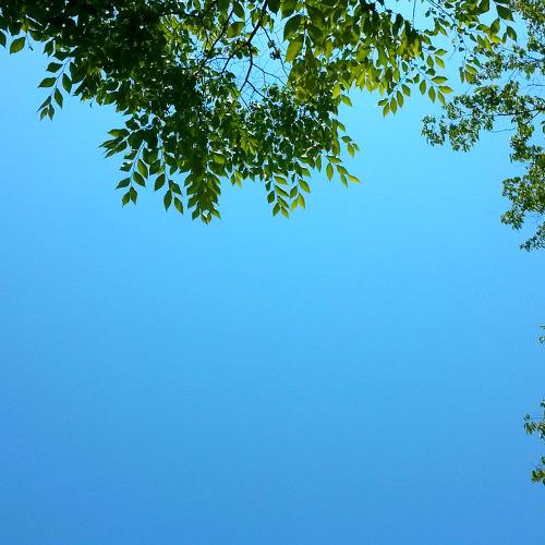 푸르른 하늘