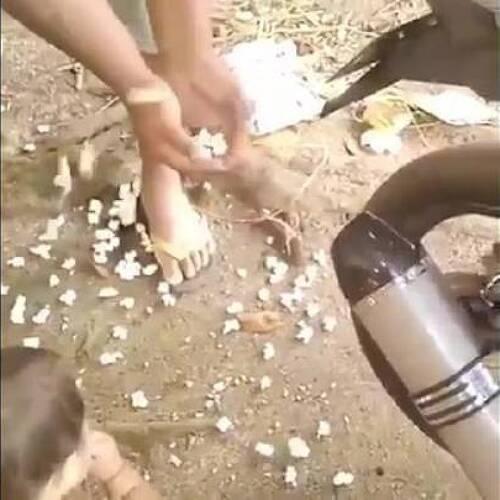 [인도] 인도에서 팝콘 만드는 방법