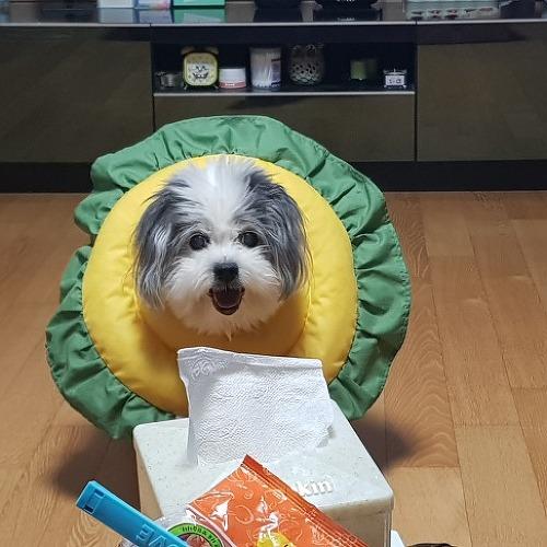 [일상] 16년 키우던 강아지가 떠났네요..