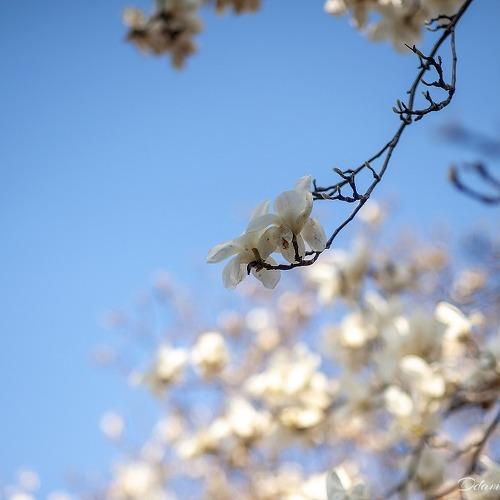 春三月: 지난 한 달..