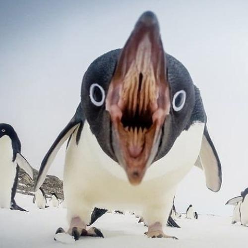 [공포/이미지] 생각보다 무서운 조류의 입 사진