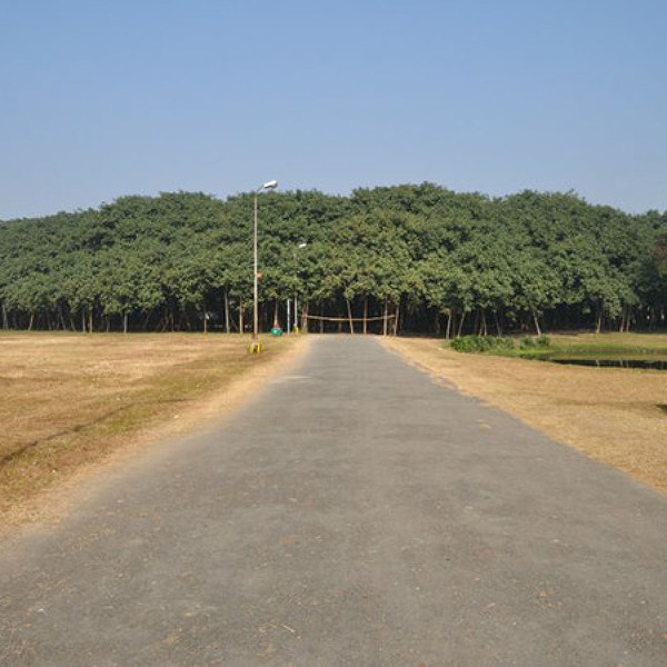 [인도] 놀라운 나무 한 그루