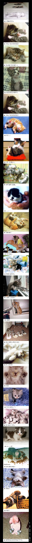 고양이 사진모음