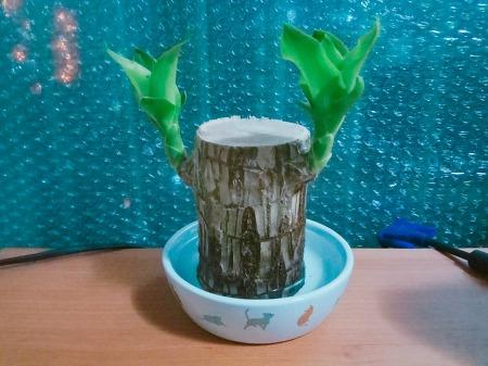 식물 키우기