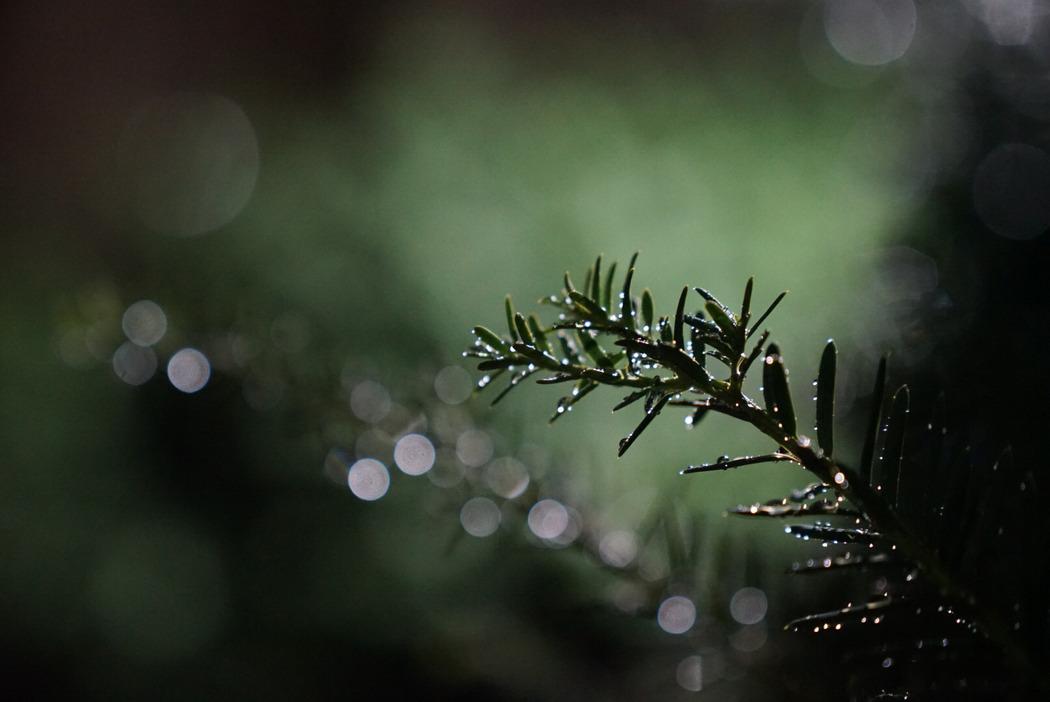 비 온 다음 나뭇잎