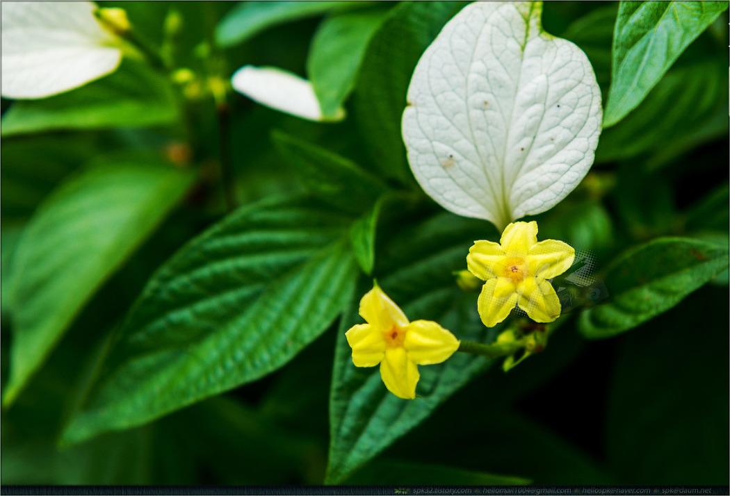 베트남 - 꽃 (2)