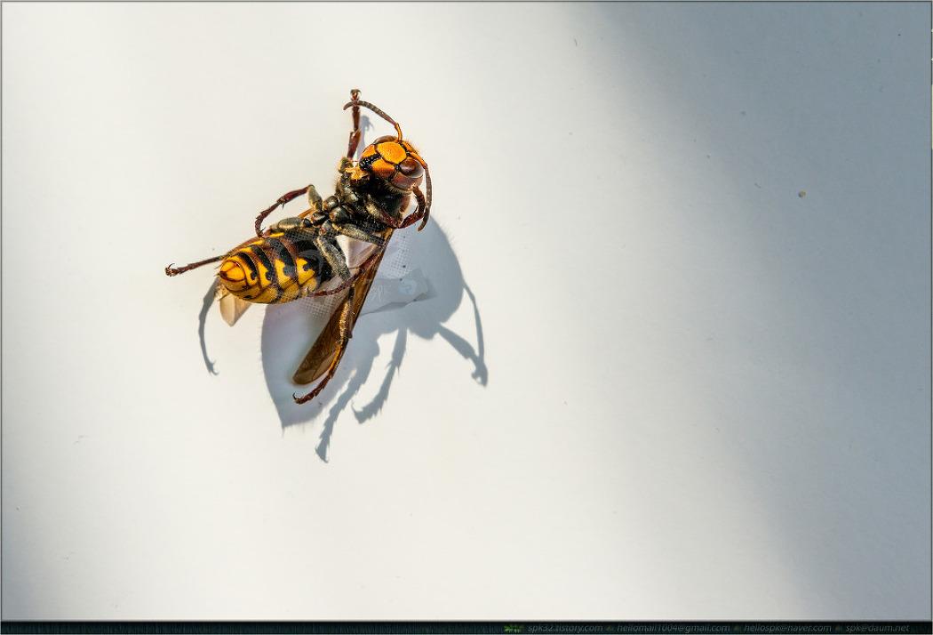 곤충 - 32 (벌, 매미)