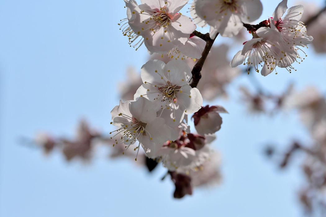 3월의 꽃