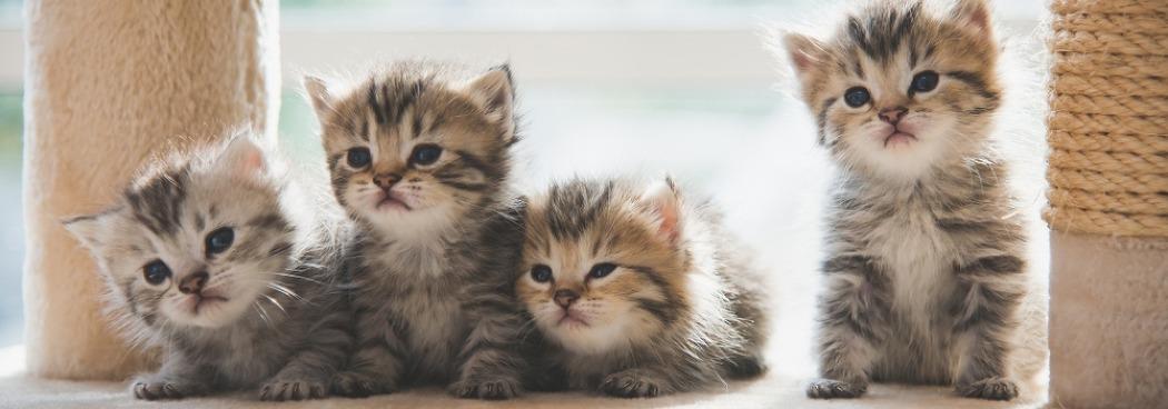 여러 마리 고양이 키울 때 주의사항