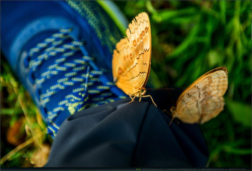 베트남 사파 (9) - 곤충