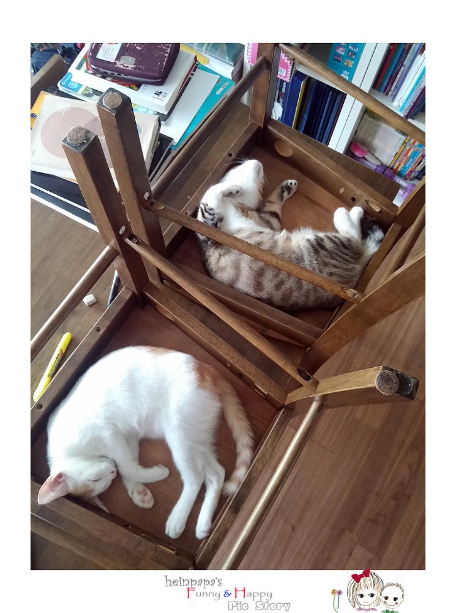 고양이 전용 원룸~