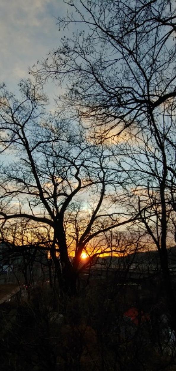 나무.일출.