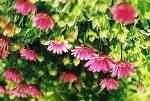 아름다운 꽃들이 가득, 허브빌리지