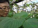 자연의선물들 자연순환유기농업현장(0827)