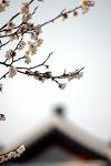 [2012.04.18] 수원 화성행궁 꽃노리가자_No01