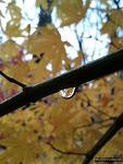 [포토] 물방울과 단풍의 기막힌 조화, 단 석장만 허락된 사진